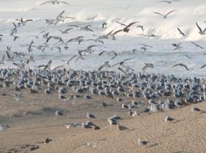 Bird Flock 1