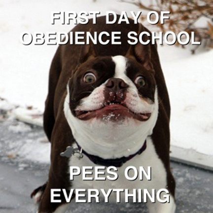 Obedience 2
