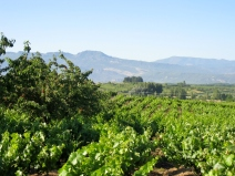 Cherry Groves and Vineyards
