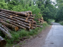 Timber Ready for Processing