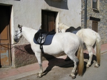 Camino Horses for Rent