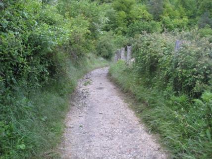 The Trailhead