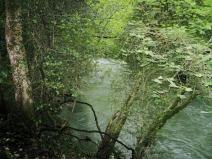 The River Arga