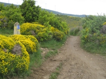 Rugged Camino