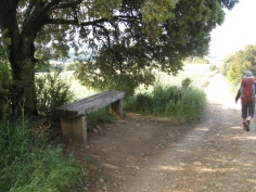 A Shady Rest Stop