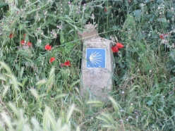 The Shell Marker