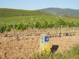 Vineyard and Marker