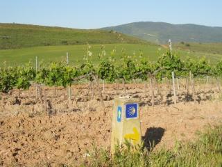 Vineyard and Marker