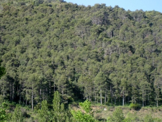 Adjacent Forest