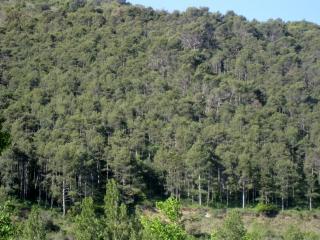 Adjacent Forest