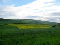 Whheat Fields & Fallow