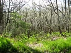Monte de Oca Trail