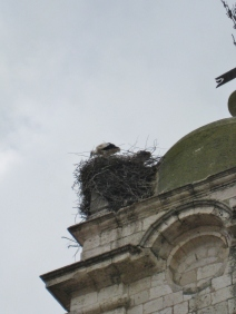 Notice the Stork & Nest