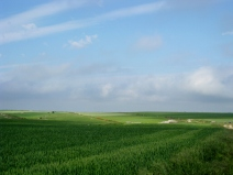 Meseta Wheat Fields