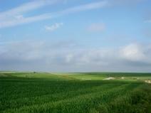 Meseta Wheat Fields