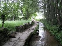 The Way Goes Creek