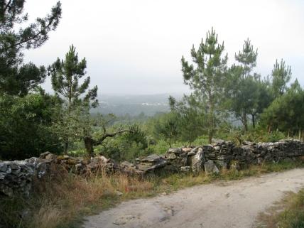 The Vista