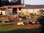 Galician Farm