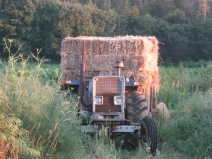 Farmer With His Hay